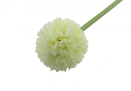 ALLIUM BLANC PM