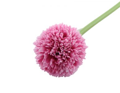 ALLIUM ROSE PM